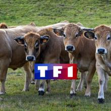tf1-stephane-chaudes-aigues-aubrac-cantal-cavd